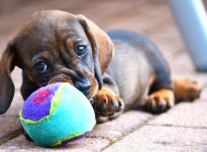 Dackel Hundespielzeug