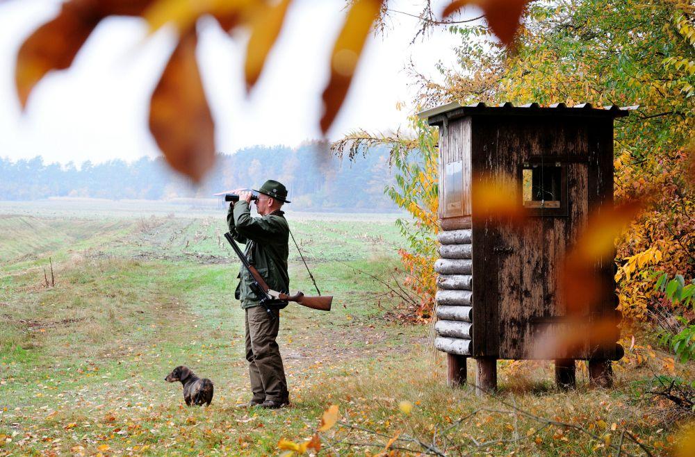 Dackel auf der Jagd: Jagddackel