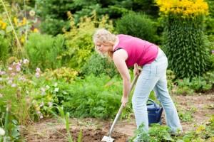 Meinen Dackel im eigenen Garten vergraben. Worauf muss ich achten?