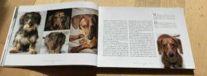 Bilder im Dackelbuch