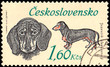 CZECHOSLOVAKIA - CIRCA 1973: a stamp, printed in Czechoslovakia, shows a Dachshund